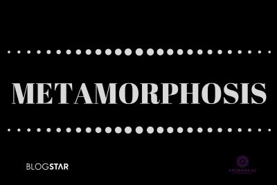 Bloqstarın təşkilatçılığı ilə Metamorfoz təlimləri
